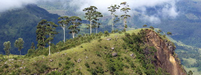 The Yala National park and Horton plains