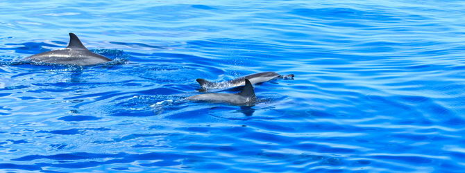 Whale and Dolphin watching coasts